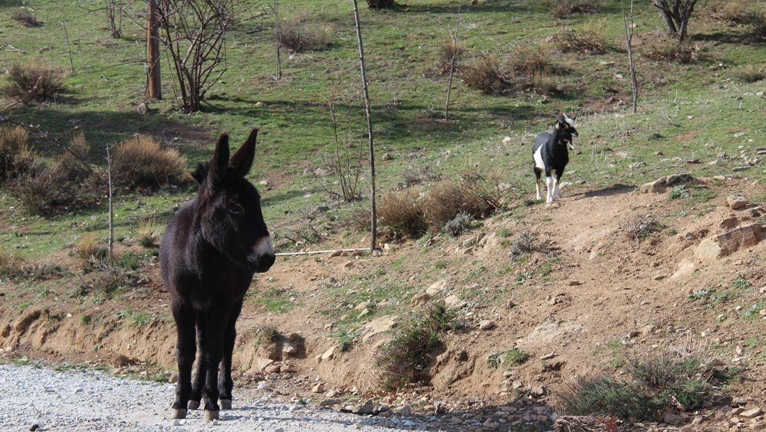 casa rural con animales en la sierra