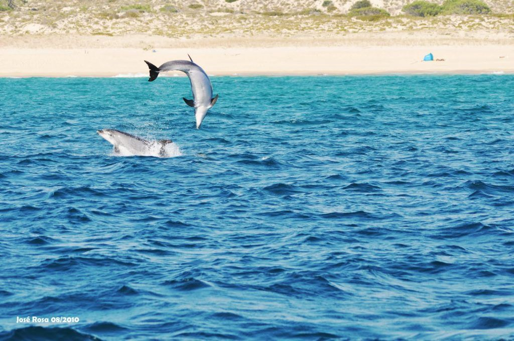 delfines en Troia